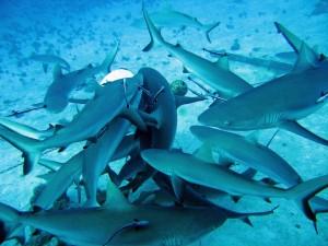 SEO Snake Oil Sales Shark Feeding Frenzy